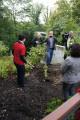 Baumpflanzung 3